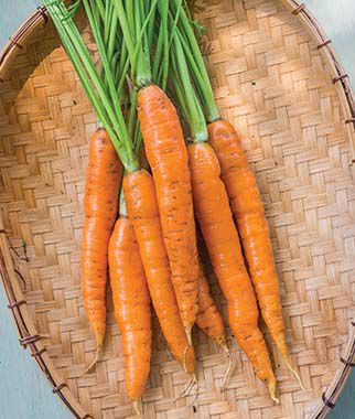 Carrot, Touchon, , large